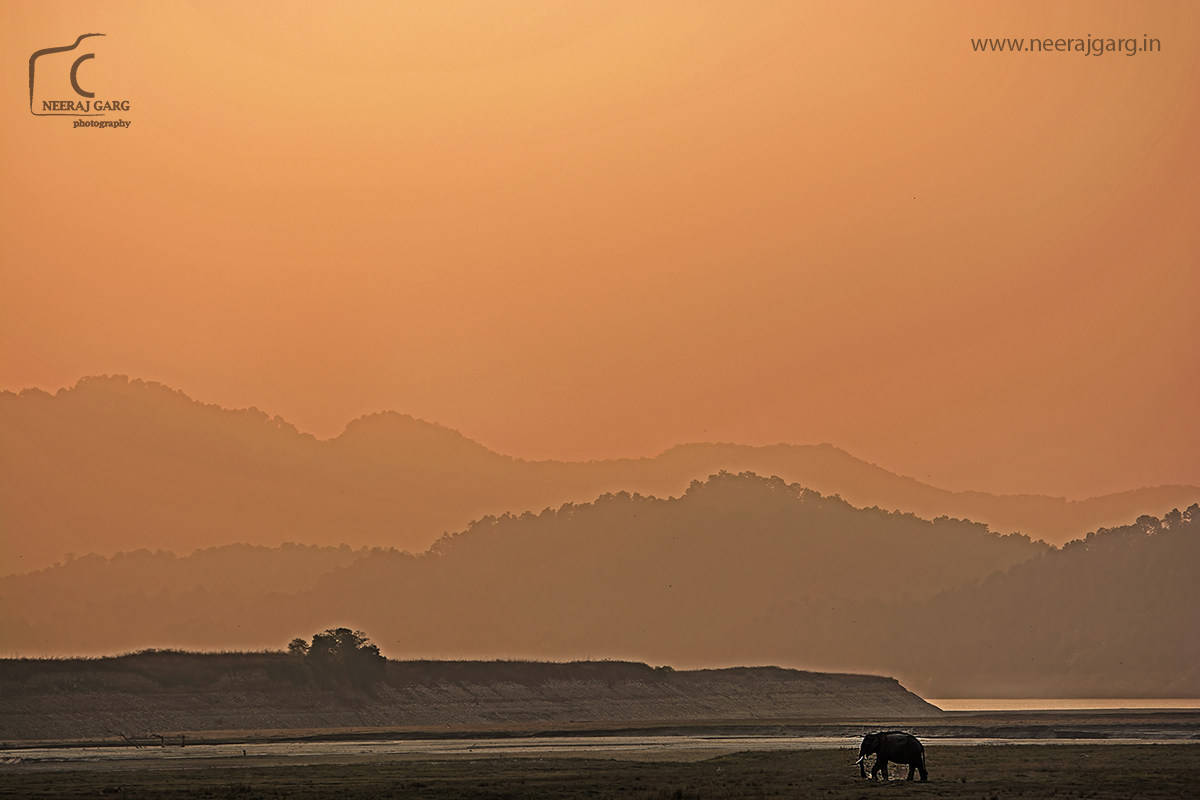 Elephant, river bed and the hills.